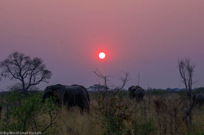Absolute Africa, Botswana, Elephant Sunset