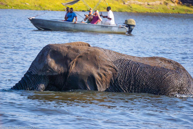 Botswana, Chobe River, Elephant in Water