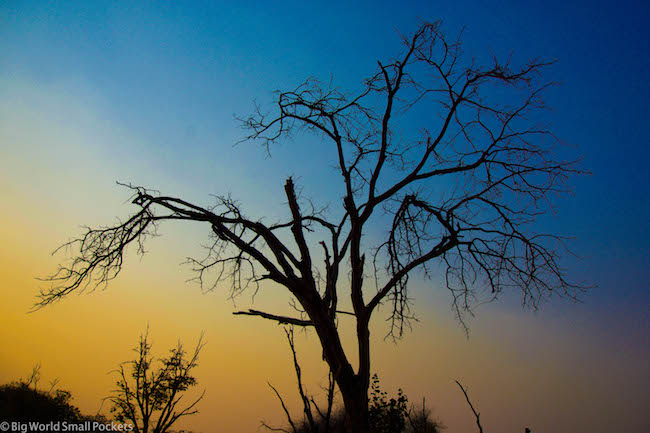 Botswana, Sunset, Tree