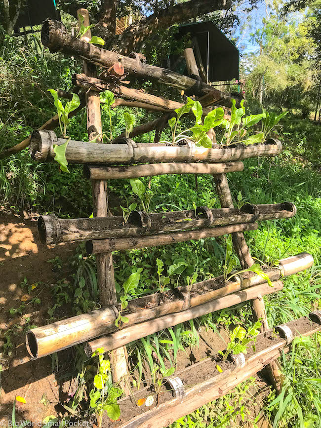 Kenya, Distant Relatives, Permaculture