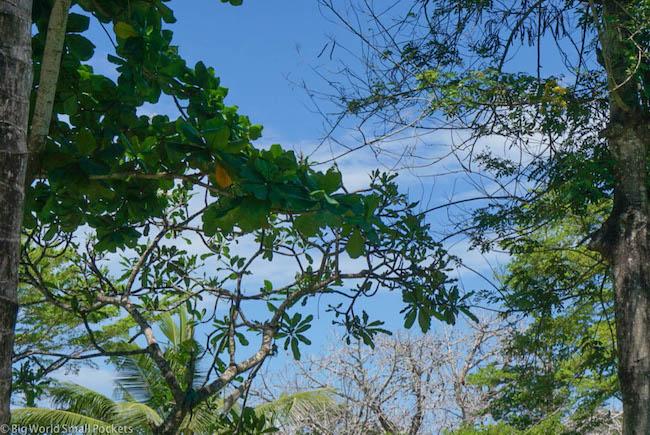 Kenya, Distant Relatives, Sky