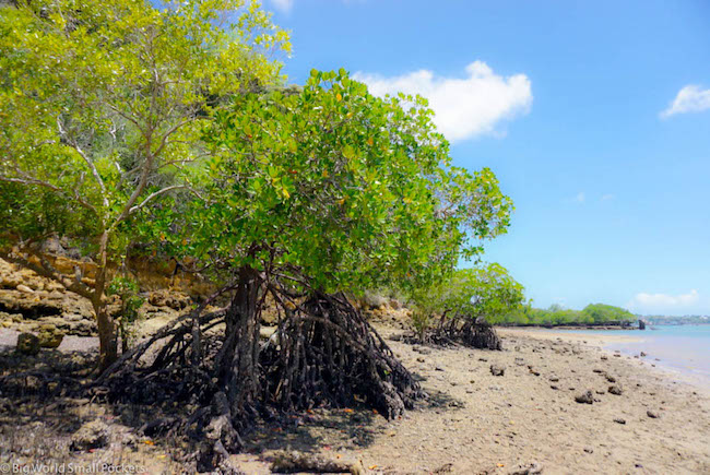 Kenya, Kilifi, Mangroves