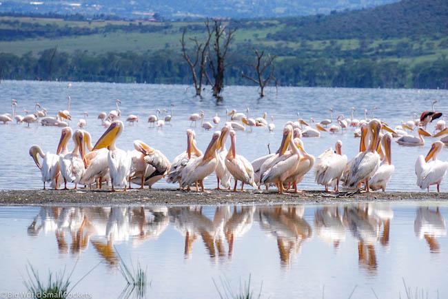 Kenya, Lake Nakuru, Flamingos