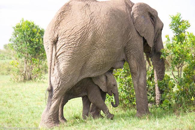 Kenya, Masai Mara, Mum and baby Elephant