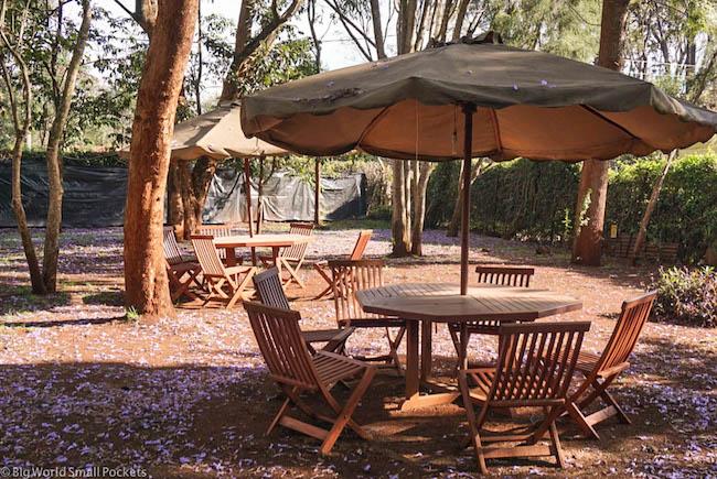 Kenya, Milimani Backpackers, Garden