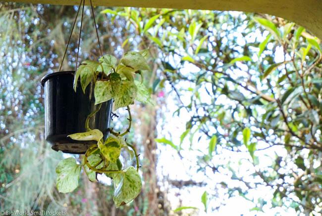 Kenya, Milimani Backpackers, Plant