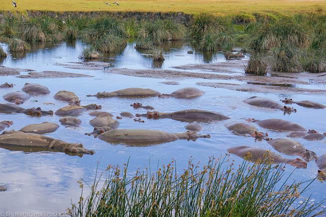 Tanzania, Ngorongoro Crater, Hippos