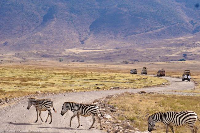 Tanzania, Ngorongoro Crater, Zebra