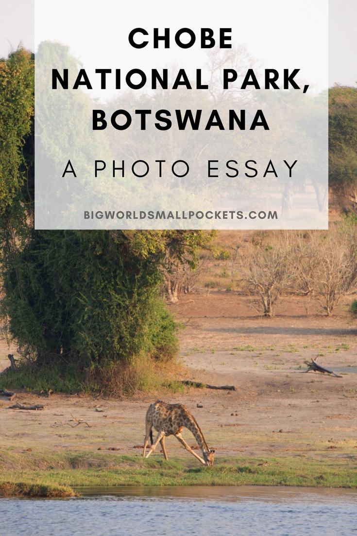 Chobe National Park, Botswana {Big World Small Pockets}