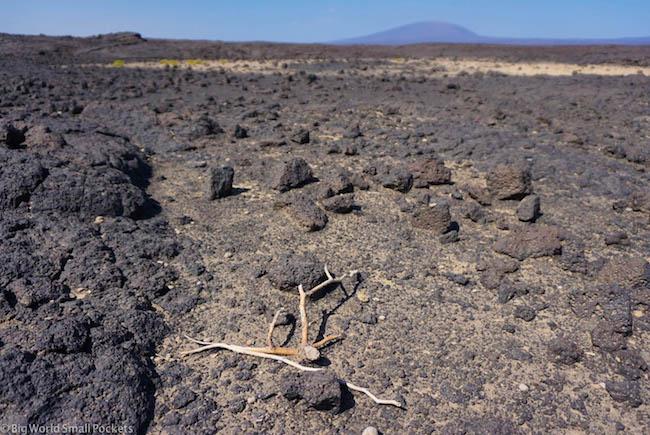 Ethiopia, Afar Region, Volcanic Ground
