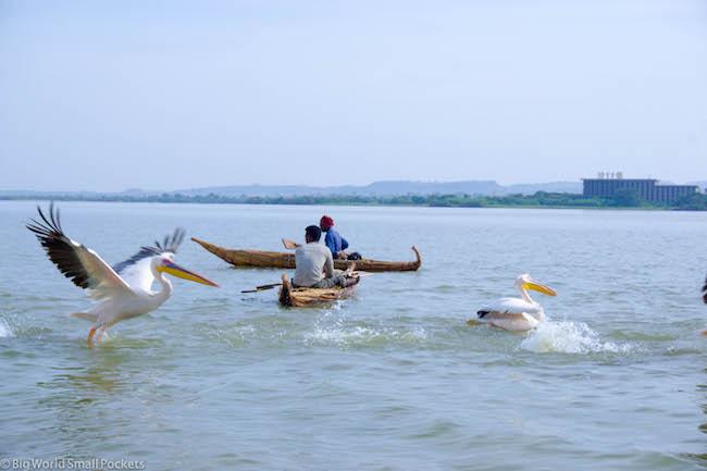Ethiopia, Bahar Dar, Pelicans