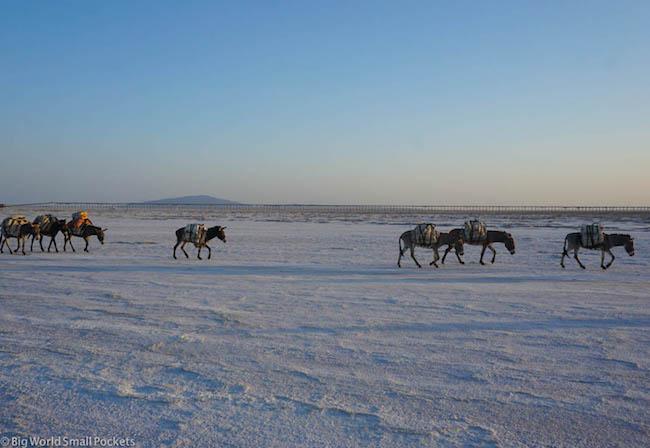 Ethiopia, Danakil Depression, Lake Asale Donkeys