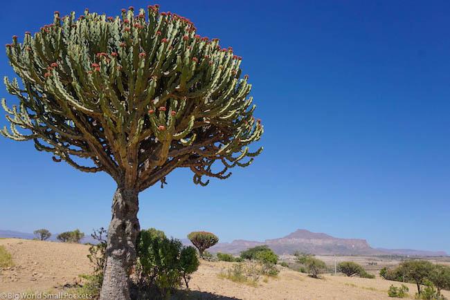 Ethiopia, Tigray, Cactus