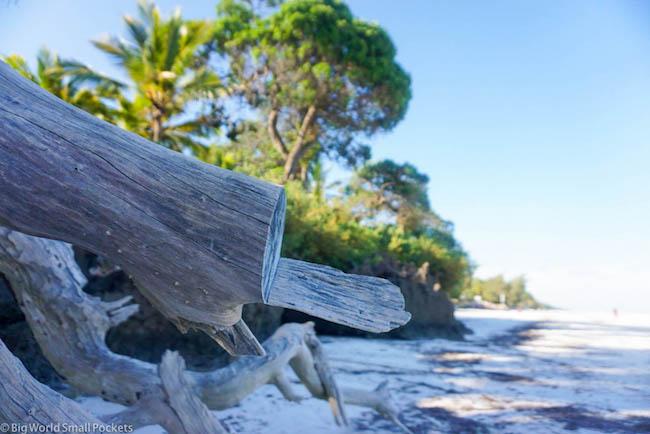 Kenya, Diani Beach, Driftwood