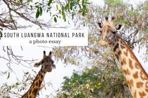 South Luangwa National Park : A Photo Essay