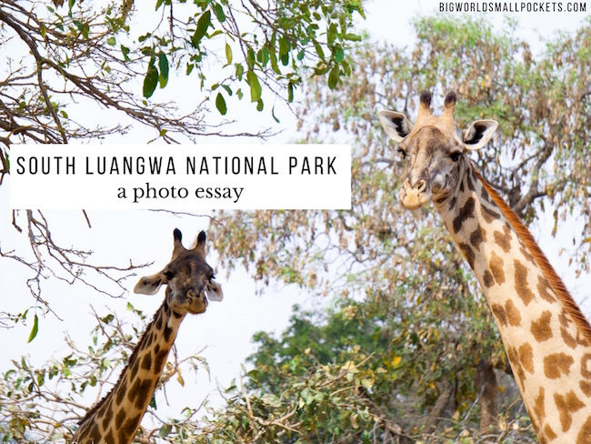 South Luangwa National Park - A Photo Essay {Big World Small Pockets}