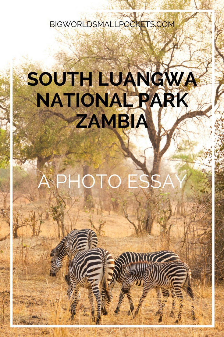 South Luangwa National Park, Zambia {Big World Small Pockets}
