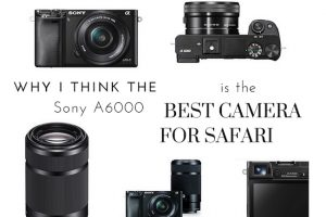 Why the Sony A6000 is the Best Camera for Safari