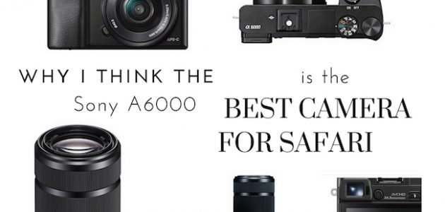 The Best Camera for Safari