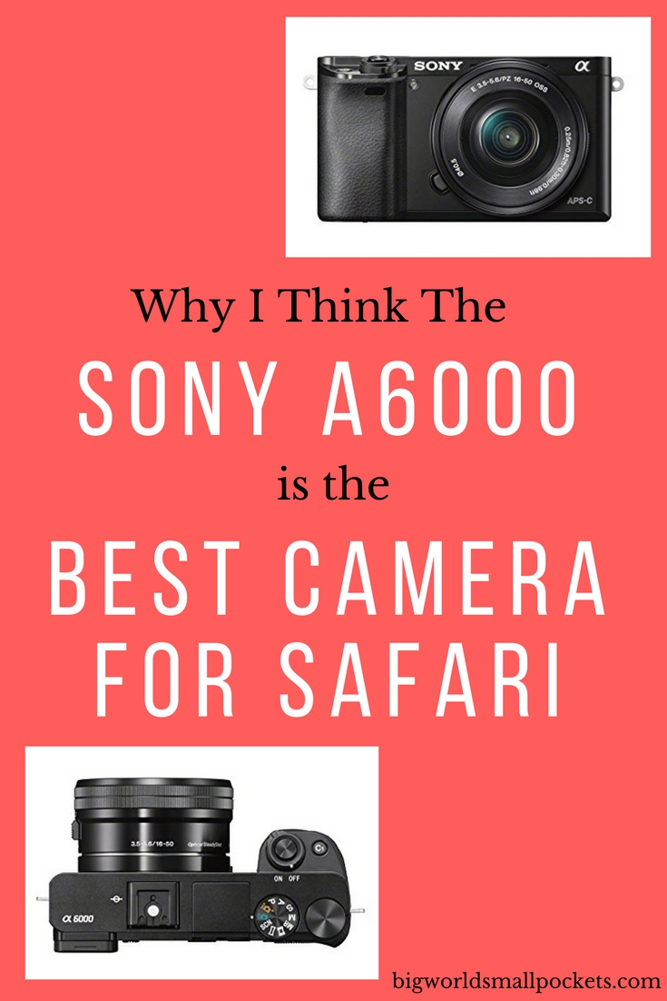 The Best Camera for Safari {Big World Small Pockets}