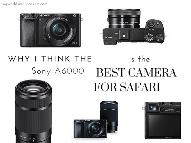 Why the Sony A6000 is the Best Camera for Safari - Big World Small