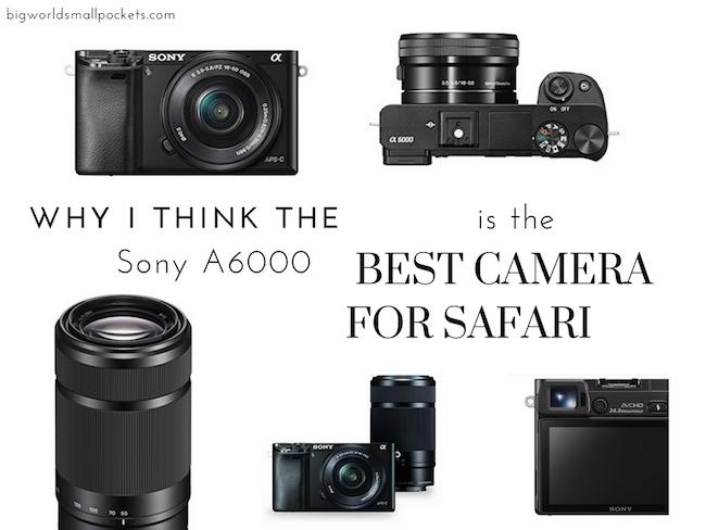 The Best Camera for Safari