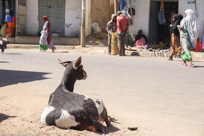 Ethiopia, Harar, Goat