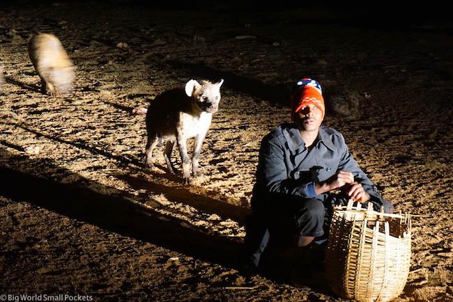 Ethiopia, Harar, Hyena Feeding