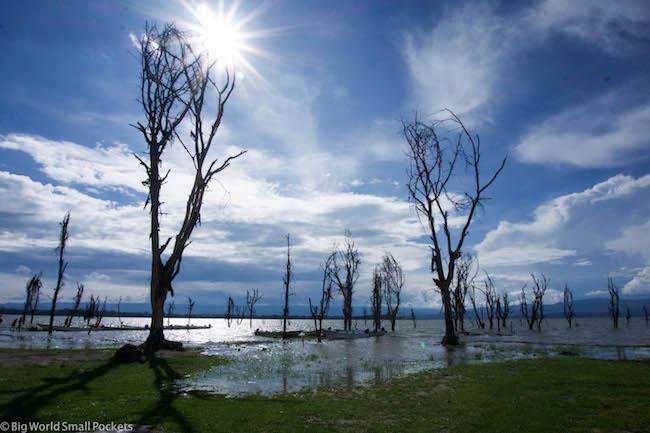 Kenya, Lake Naivasha, Trees