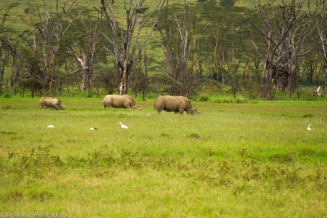 Kenya, Lake Nakuru, Rhino Family x3