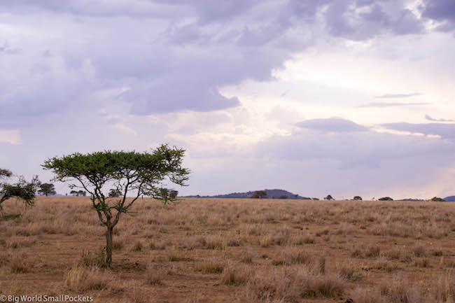Tanzania, Serengeti, Acacia Tree