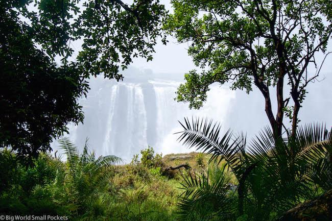 Zimbabwe, Victoria Falls, Foliage