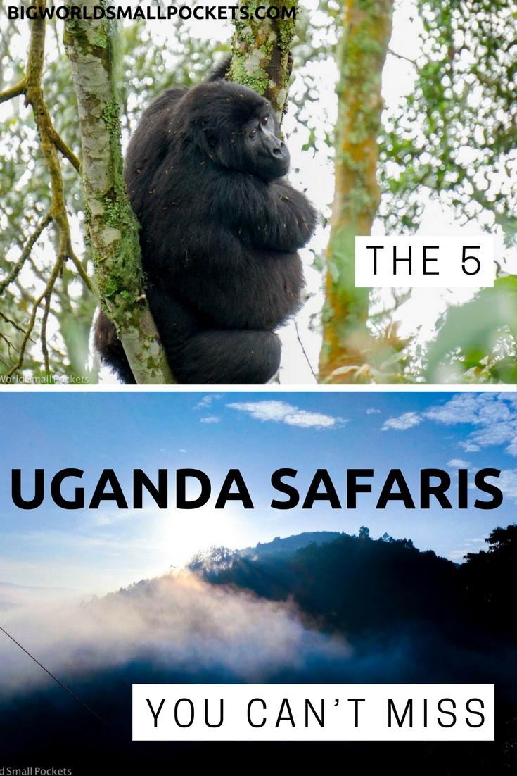 5 Incredible Safari Experiences in Uganda You Can't Miss {Big World Small Pockets}