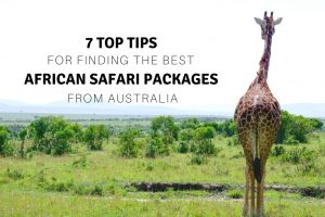 African Safari Packages From Australia : 7 Top Tips for Finding the Best