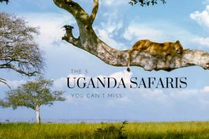 The 5 Uganda Safaris You Can't Miss