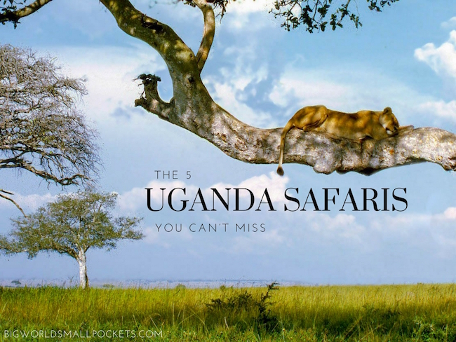 The 5 Uganda Safaris You Can't Miss