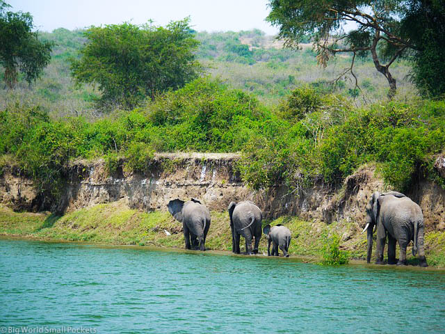 Uganda, Queen Elizabeth National Park, Elephants