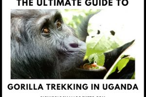 The Ultimate Guide to Gorilla Trekking Uganda