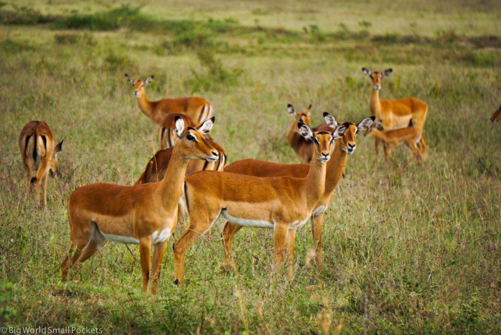 Kenya, Hells Gate NP, Antelope