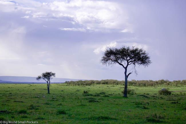 Kenya, Masai Mara, Acacia Trees