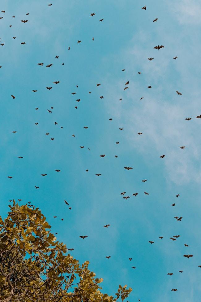 Rwanda, Musanze Caves, Bats
