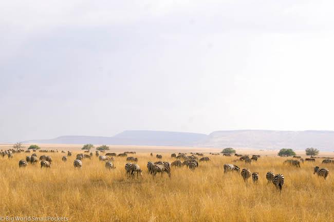 Tanzania, Serengeti, Zebra
