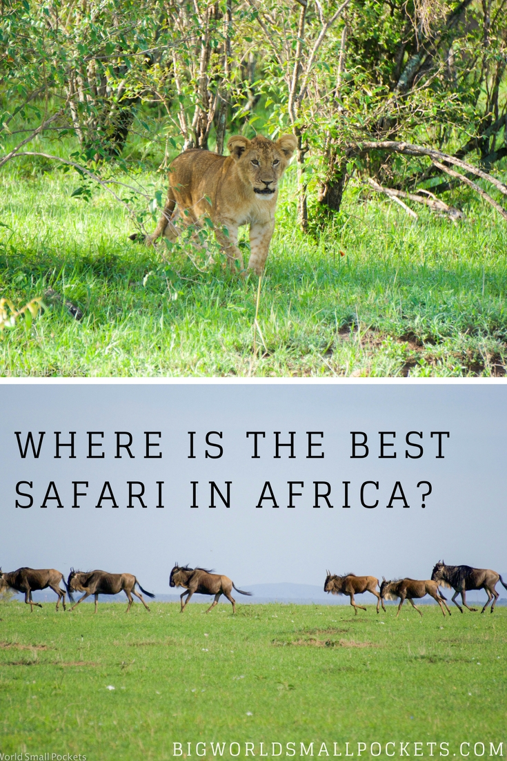 The Best Safari in Africa Award Goes To... {Big World Small Pockets}