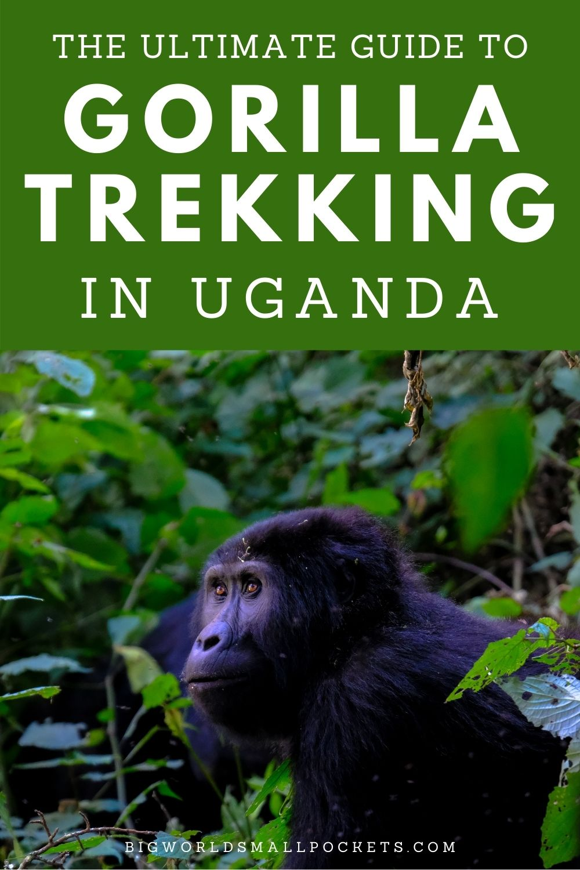 Ultimate Guide to Gorilla Trekking in Uganda