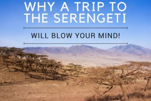 Why the Serengeti Will Blow Your Mind!