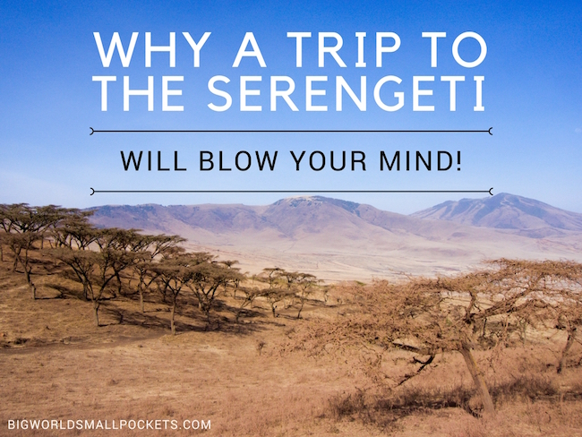 Why a Trip to the Serengeti Will Blow Your Mind!
