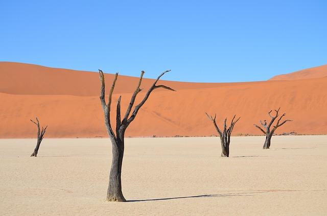 Namibia, Sossusvlei, Desert Trees