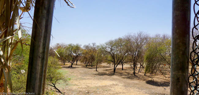 Sudan, Khartoum, Al Sunut Forest