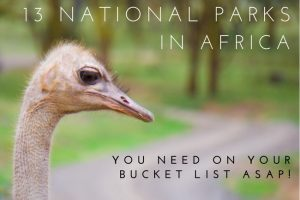 13 National Parks in Africa You Need to Visit!