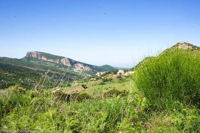 Lebanon, Cedars, Ital